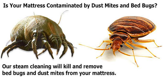 dust mite removal Ottawa