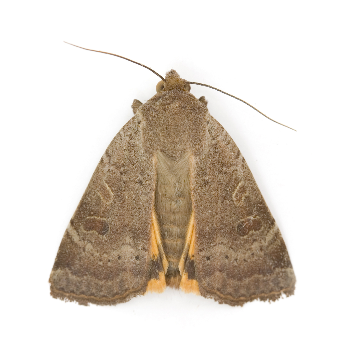 Moth Treatment Removal And Repair Service
