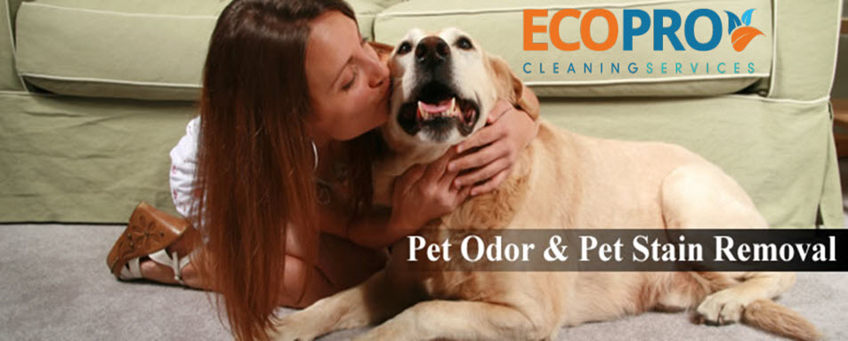pet stain odor and urine treatment ottawa eco pro ottawa. Black Bedroom Furniture Sets. Home Design Ideas